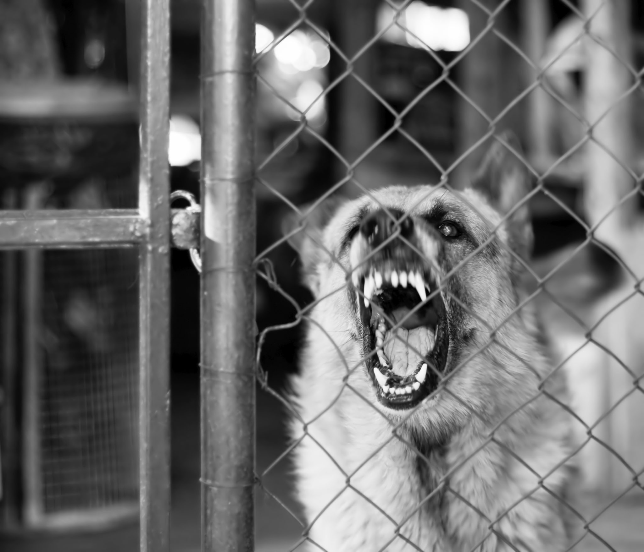 Kennel For Aggressive Dog