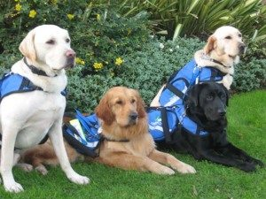 assistance_dogs_resting_after_graduation_small